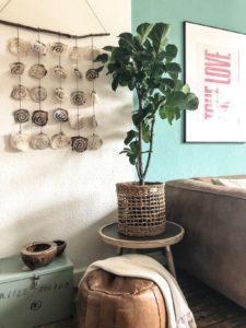 plant met blauwe muur flexa