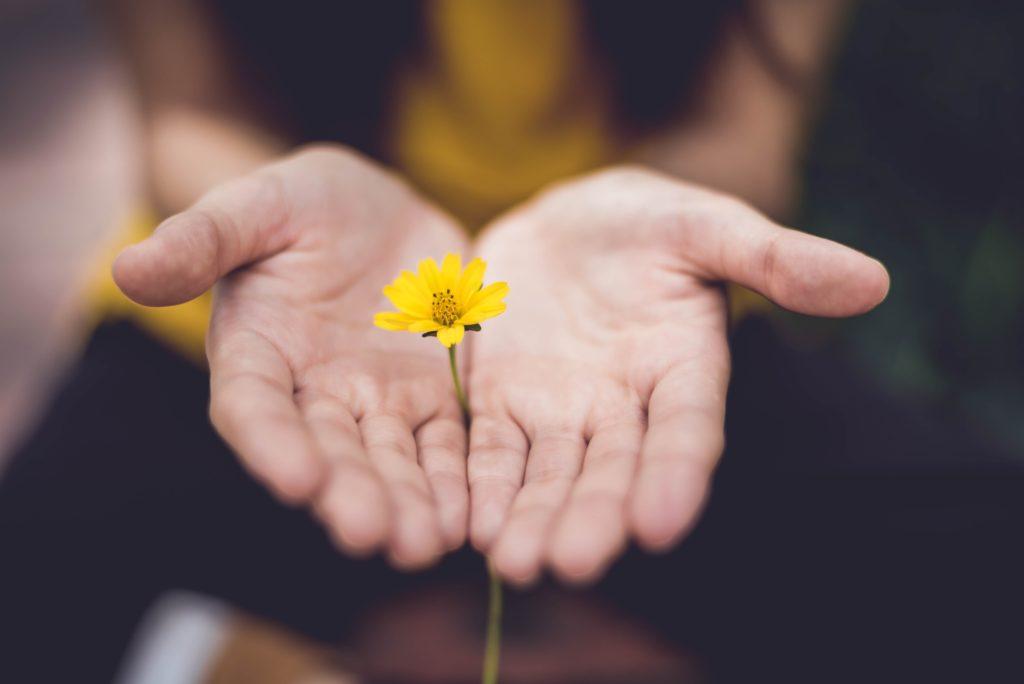 bloem in handen