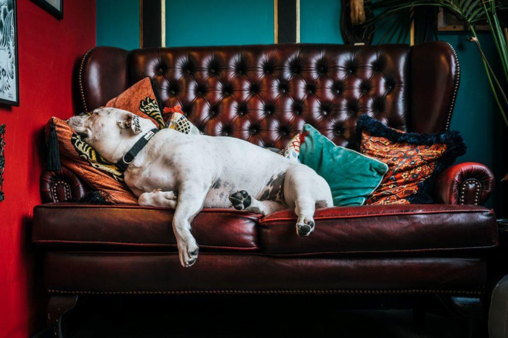 chesterfield bank met hond